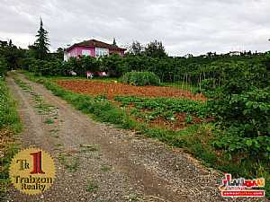 Farm 13 dunam For Sale yomra Trabzon - 8