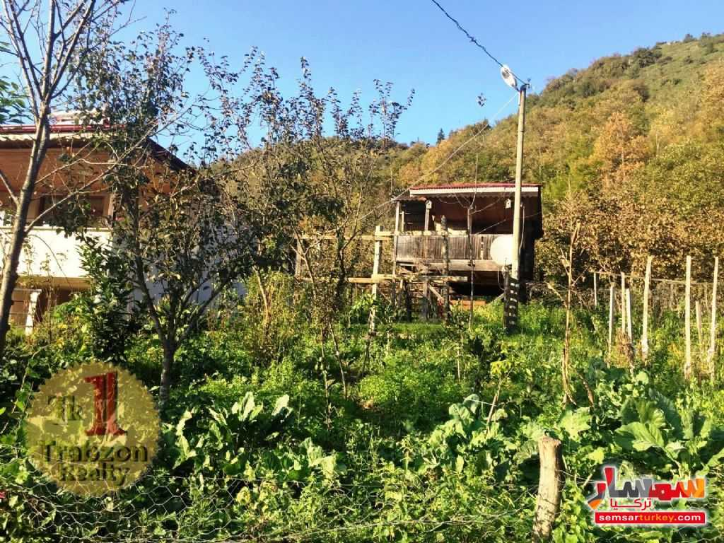 Photo 12 - Farm 5,000 sqm For Sale yomra Trabzon
