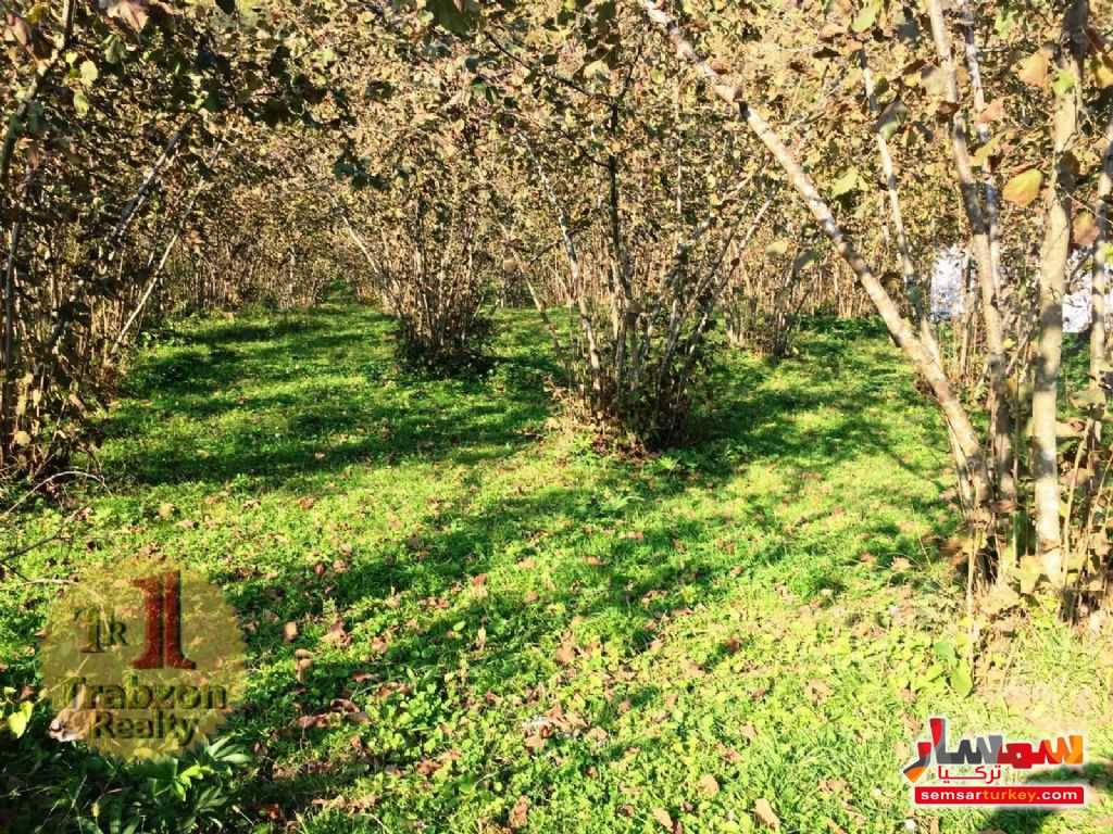 Photo 14 - Farm 5,000 sqm For Sale yomra Trabzon