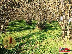Farm 5,000 sqm For Sale yomra Trabzon - 14