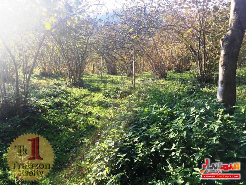 Photo 5 - Farm 5,000 sqm For Sale yomra Trabzon