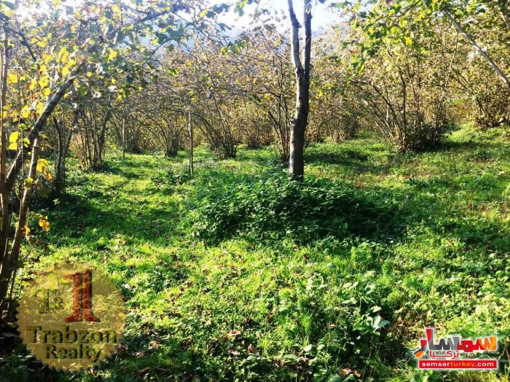 Photo 8 - Farm 5,000 sqm For Sale maçka Trabzon