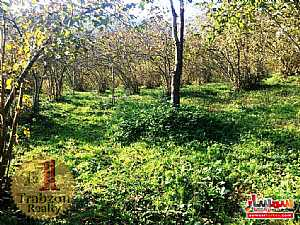 Farm 5,000 sqm For Sale maçka Trabzon - 8