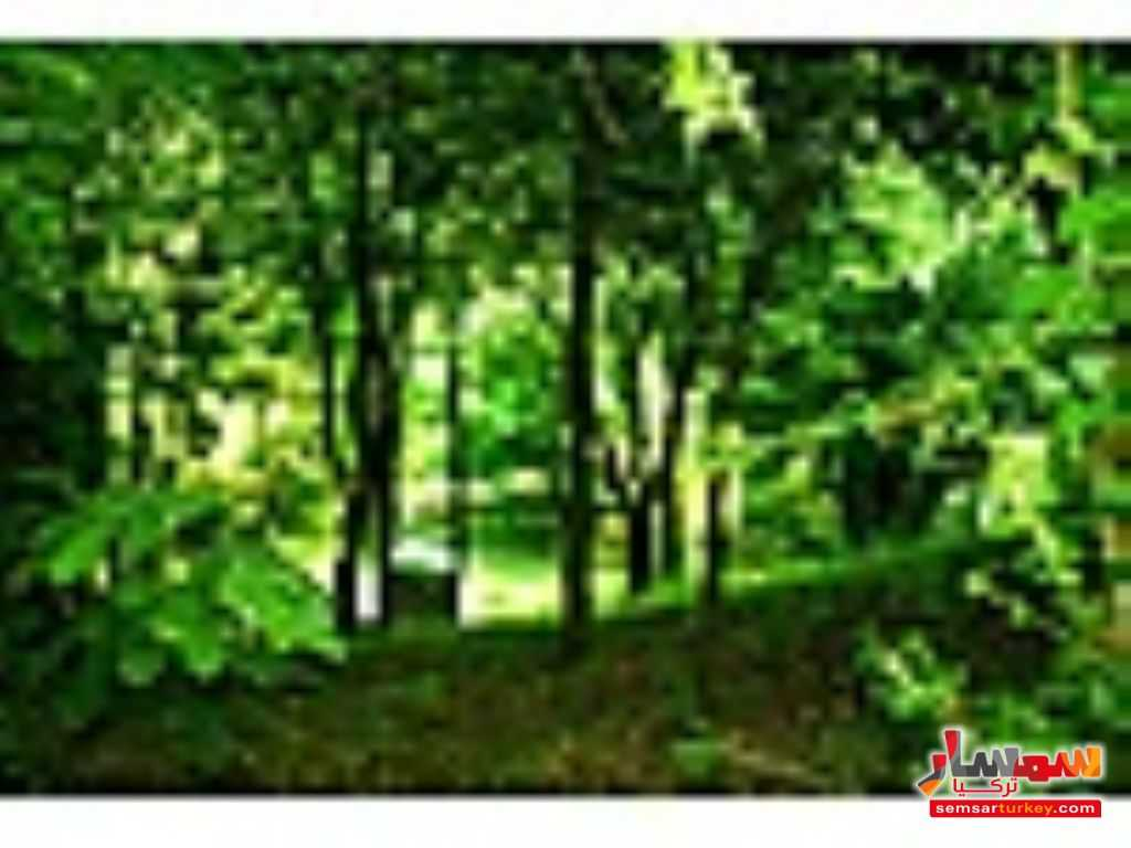 Photo 7 - Land 7600 sqm For Sale Shile Istanbul