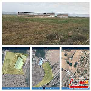 Farm 29350 sqm For Sale yeshilyurt Malatya - 4