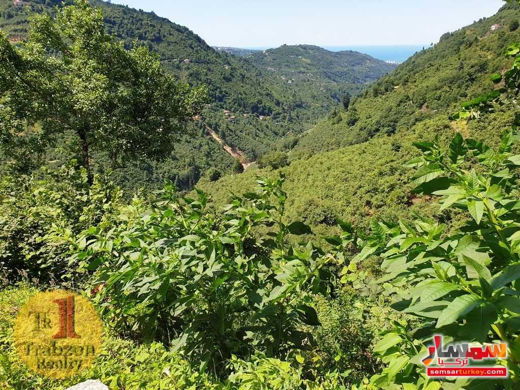 Photo 12 - Farm 17,500 sqm For Sale yomra Trabzon