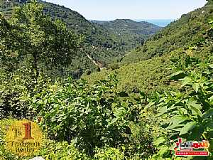 Farm 17,500 sqm For Sale yomra Trabzon - 12