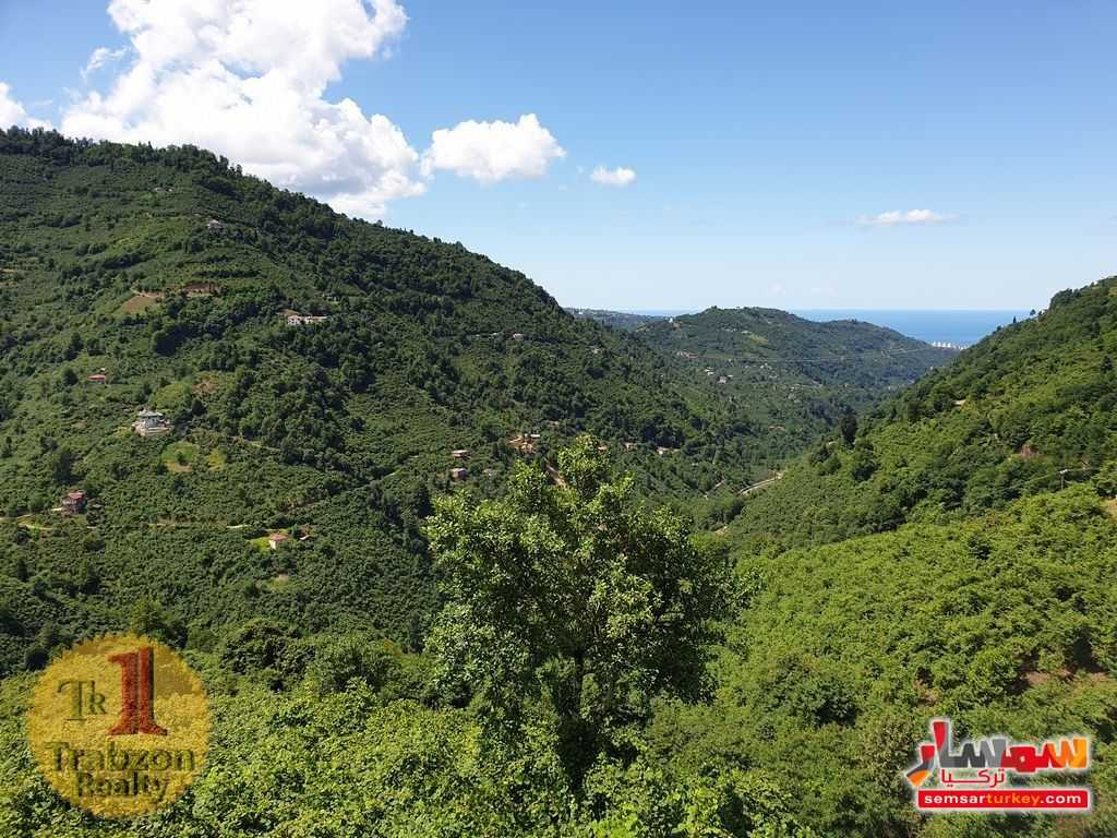 Photo 5 - Farm 17,500 sqm For Sale yomra Trabzon