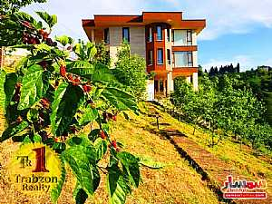 Ad Photo: Farm 5000 sqm in Trabzon