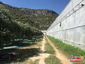 Farm 50 acre For Sale erdemli Mersin - 1