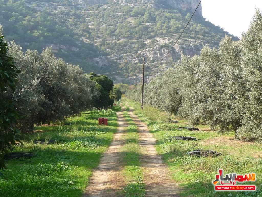 Photo 3 - Farm 50 acre For Sale erdemli Mersin