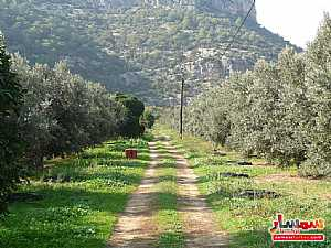 Farm 50 acre For Sale erdemli Mersin - 3