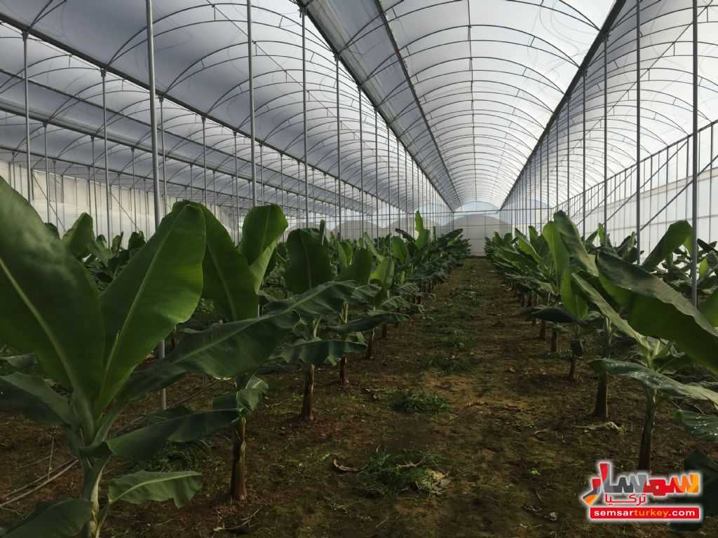Photo 4 - Farm 50 acre For Sale erdemli Mersin