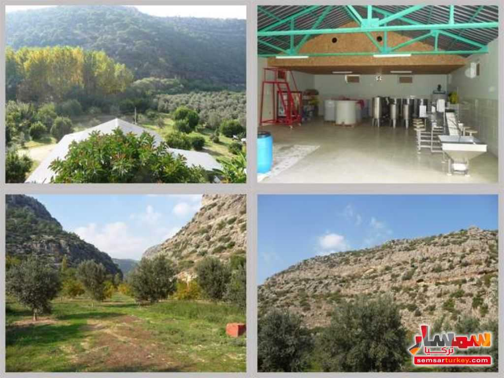 Photo 5 - Farm 50 acre For Sale erdemli Mersin