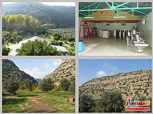 Farm 50 acre For Sale erdemli Mersin - 5