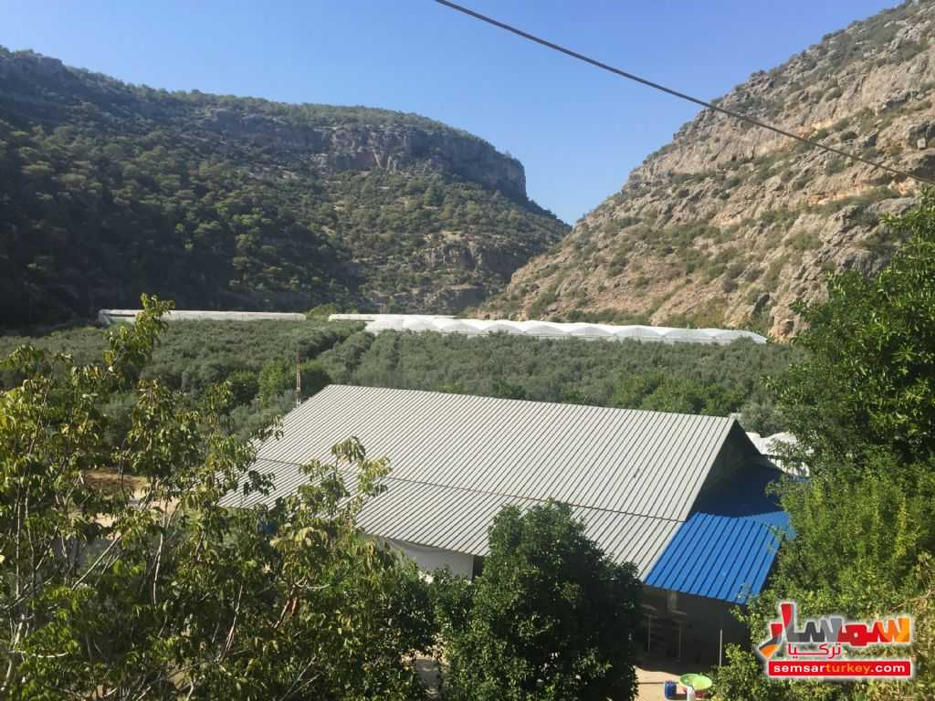 Photo 8 - Farm 50 acre For Sale erdemli Mersin