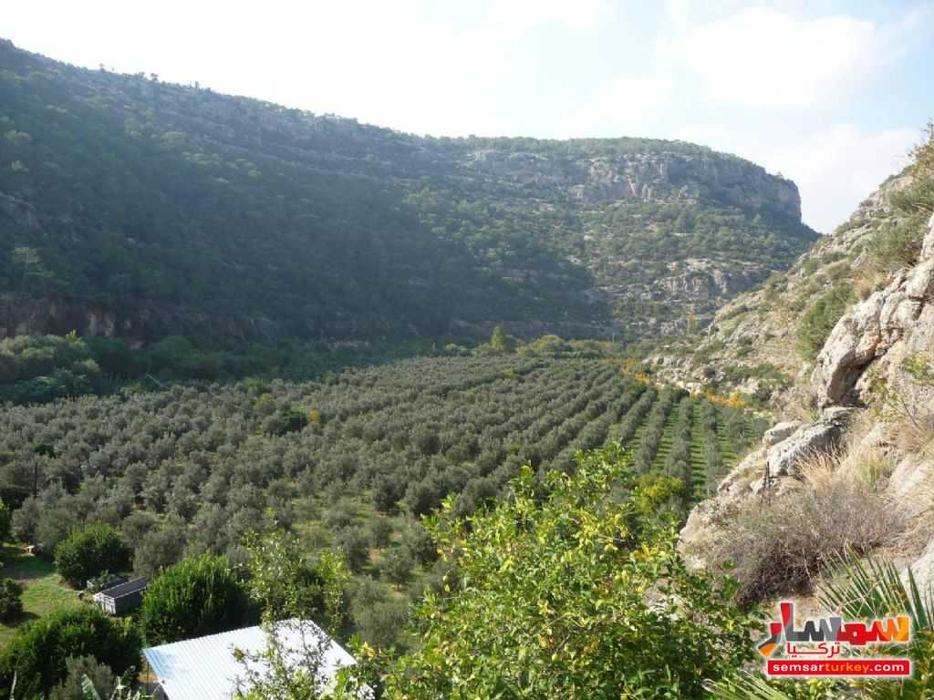 Photo 14 - Farm 50 acre For Sale erdemli Mersin