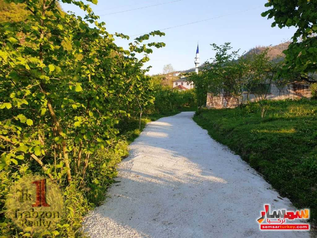 Photo 6 - Farm 26,000 sqm For Sale yomra Trabzon